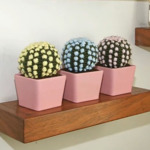 Cactus a uncinetto con punto pop corn – Video Tutorial.